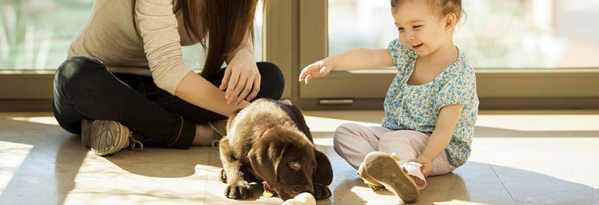 Feira de adoção cachorro cão vipzinho