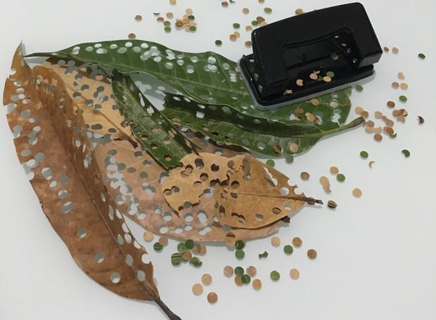 Confete Ecológico no Portal Vipzinho.