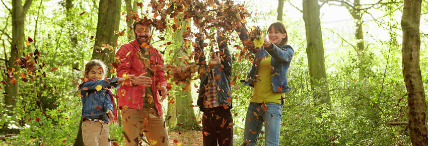 Bosque Walden no Portal Vipzinho