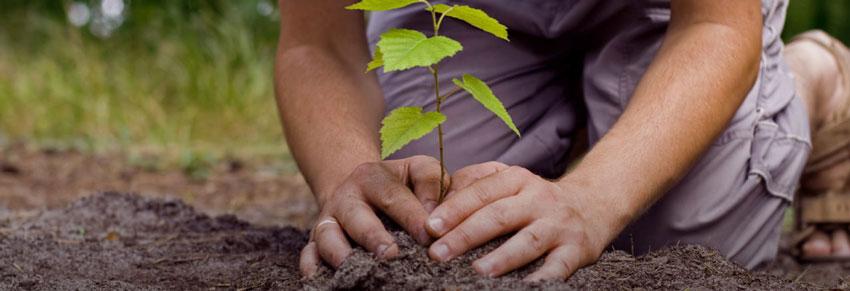 plantio de árvores vipzinho