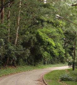 Parque Estadual Alberto Löfgren – Horto Florestal