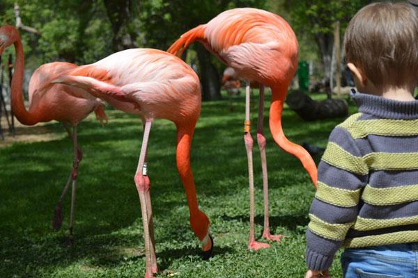 zoológico de são paulo no vipzinho