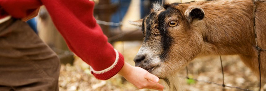 alimentando os animais na fazendinha do adventree no vipzinho