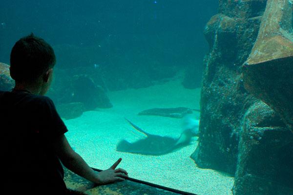 aquário de são paulo no vipzinho