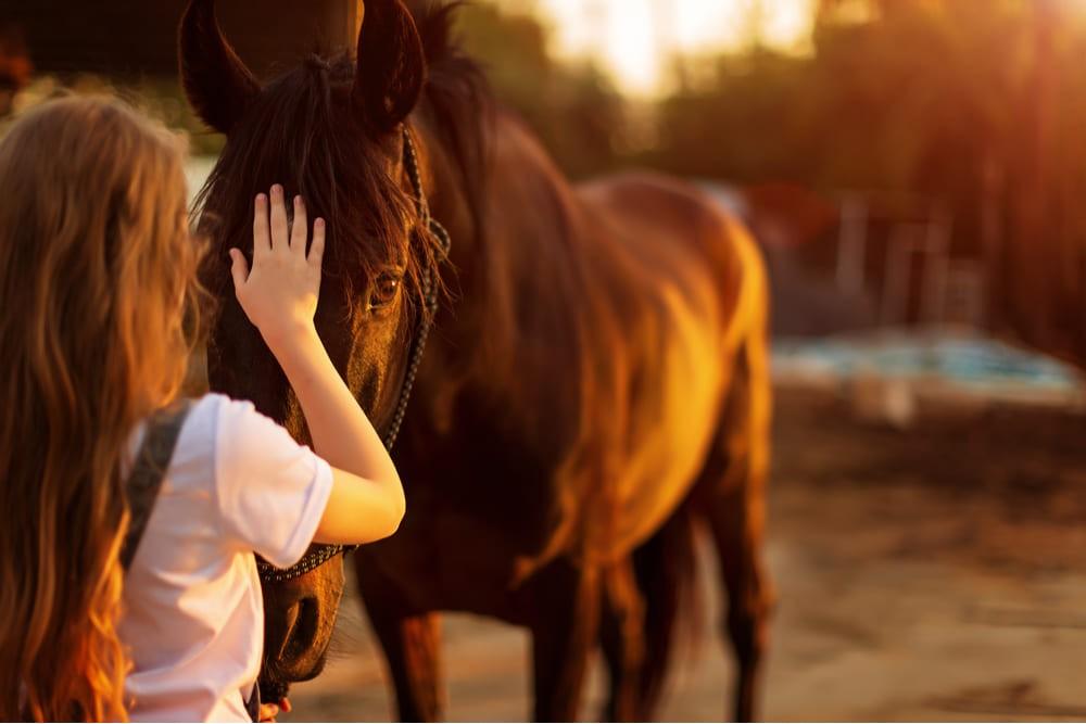 cavalos com crianças no vipzinho