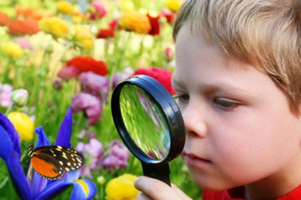 borboletário de diadema no vipzinho