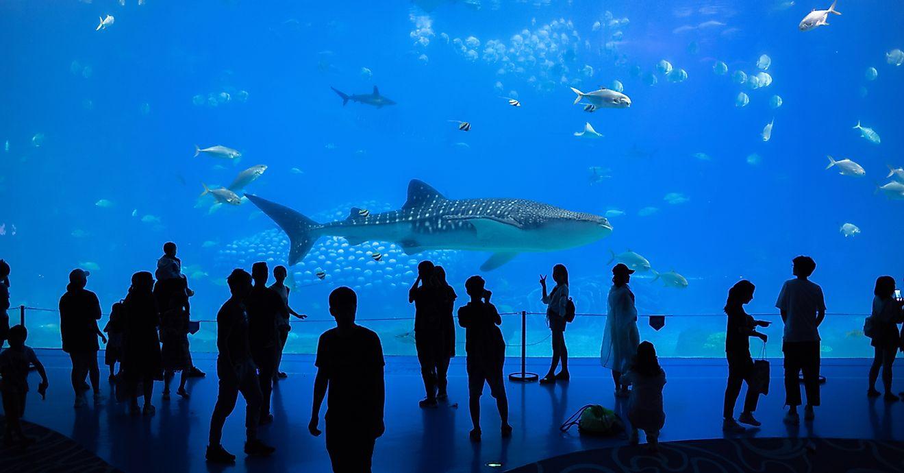 georgia aquarium vipzinho